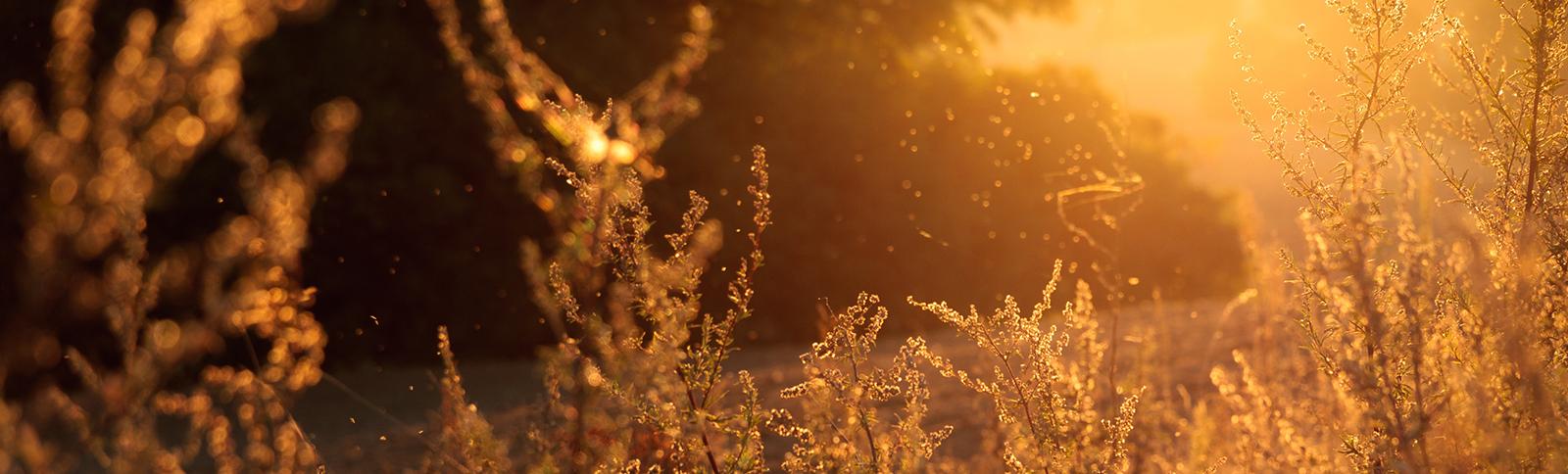 feld, field, flowers, blumen, treiben, reise, auf den weg machen, Story, Autor, Autoren, Coaching, Seminar, Timeline